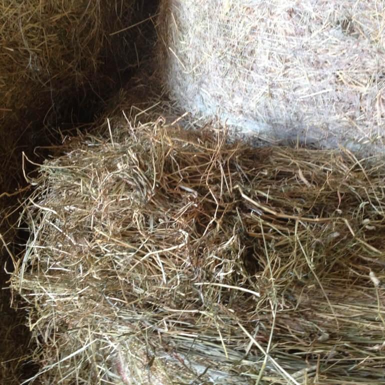 куплю старое низкого качества сено солому московская область